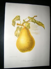 Amateur Gardening 1892 Botanical Print. A December Dessert Pear, Fruit.